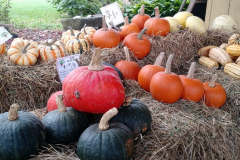 our_squash_and_pumpkins_appear_in_early_fall_20180330_1876962365