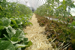 greenhouse_romaine_tomatoes_may_20180330_1755032021
