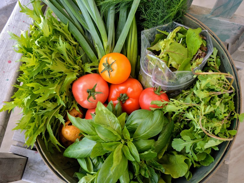 Some of the veggies you could get in your Lean & Green Share June - July - August!