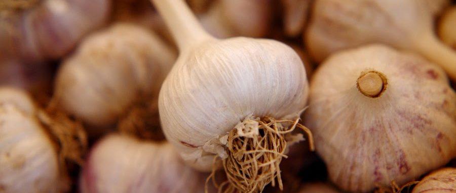 Organic Garlic Seed!