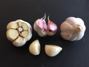 Organic garlic seed